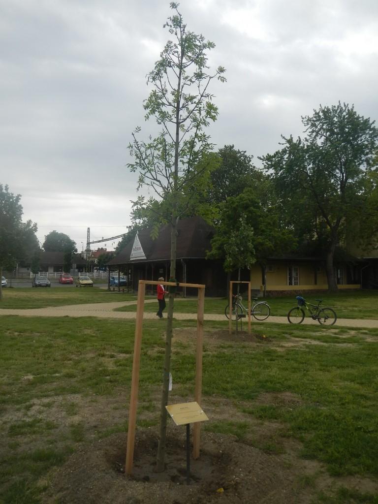 munka-20130509 045